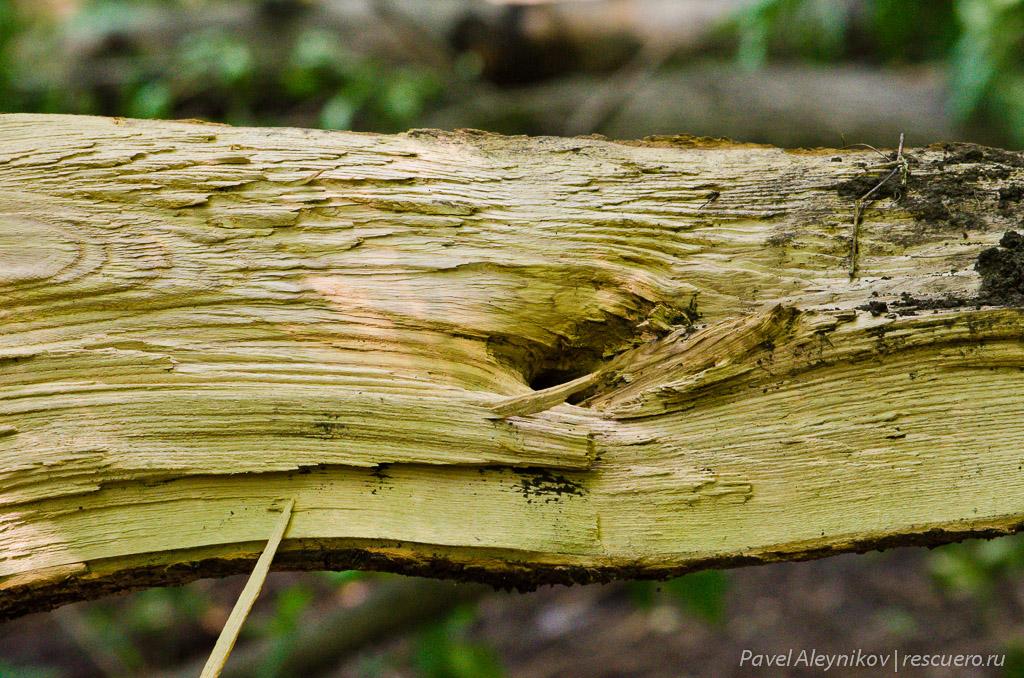 Лопнувшее дерево