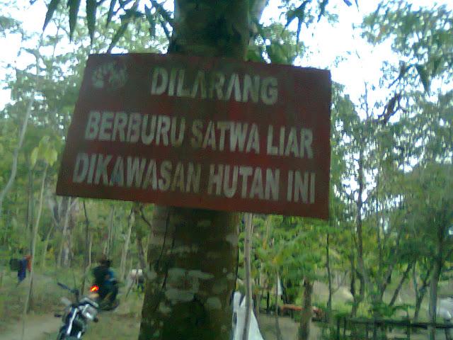 Dilarang berburu di bangilan tuban