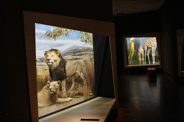 Ebenso Löwen und Giraffen
