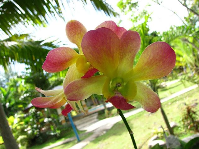 Из зимы в лето. Филиппины 2011 - Страница 3 IMG_0010%252520%2525282%252529