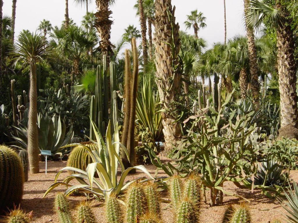 Alternative Eden Exotic Garden: Garden Visit: Majorelle Garden ...