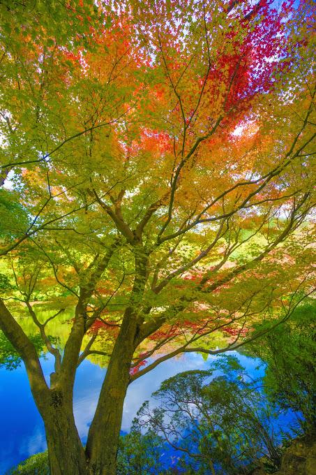 京都 紅葉 龍安寺 写真6