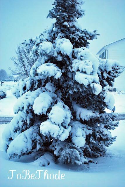 beautiful snow tree