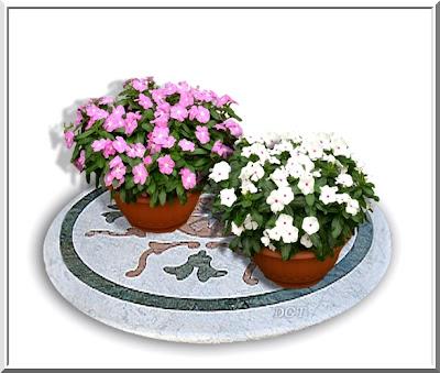 http://tunturuntun-com.blogspot.com.es/2011/03/vinca-vicaria-pervinca.html