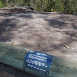 Log protecting engravings (179805)