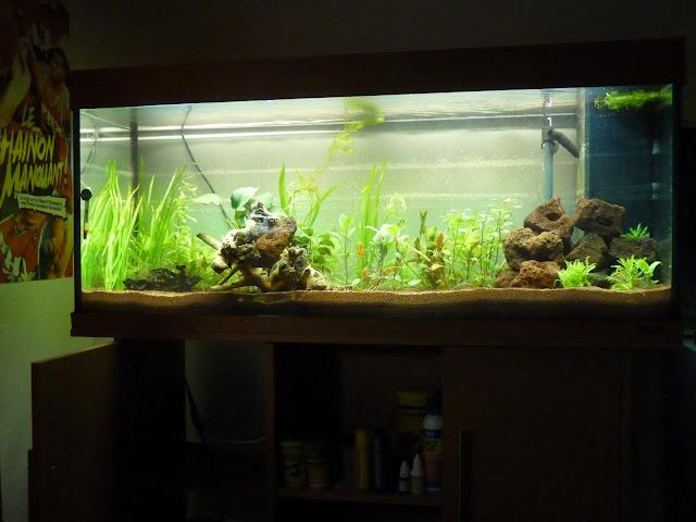 Ma petit histoire Aquariophile de 2009 à aujourd'hui  P1020585