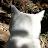 Nielle Hehe avatar image