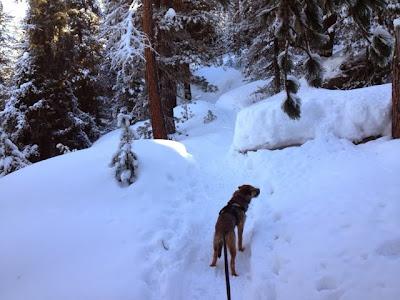 Toller Winterwald, denkt Border Terrier Charly