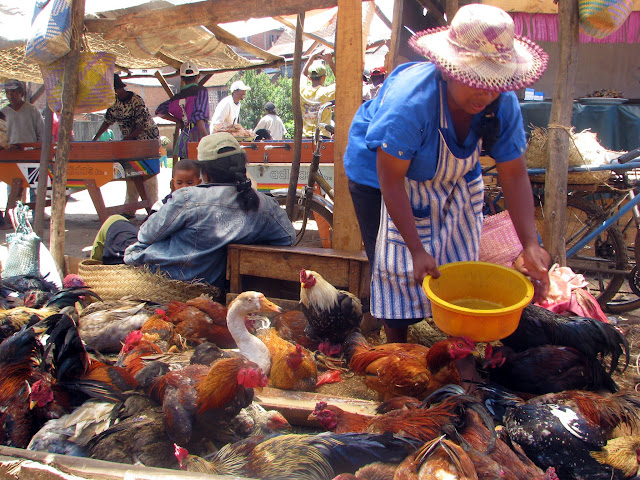 صور من مدغشقر Madagascar 14846825175