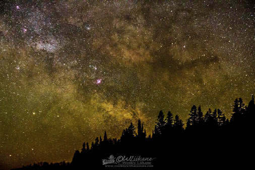 Milky Way Tree Line.jpg