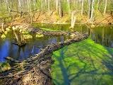 Бобровое озеро в Пуще
