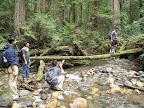 Creek crossing over a fallen tree