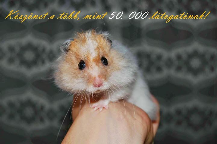 koszonet_50.000