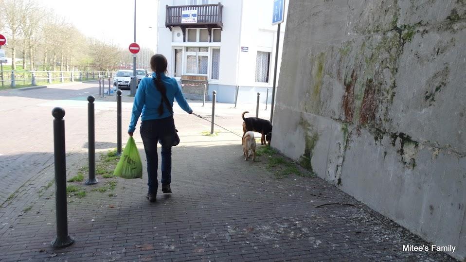 Balades canines en Nord (59)/Pas de Calais (62) - Boulogne-sur-Mer, Calais et Lille - Page 4 DSC01792