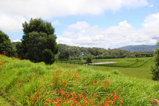 Pasture and bush on the road to Jamberoo