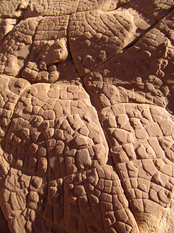 Texture on Entrada Sandstone rocks