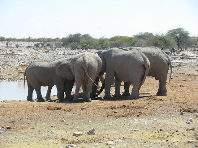 أفضل ما في أفريقيا  Best of Africa Namibia_180807121411