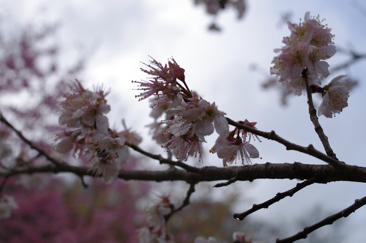 看瀑布~~賞櫻花