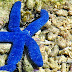 Wordless Wednesday 009 and Watery Wednesday 005: Blue Starfish