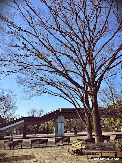 สวนโยโยงิ-Yoyogi Park
