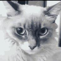 Kristin Dilley