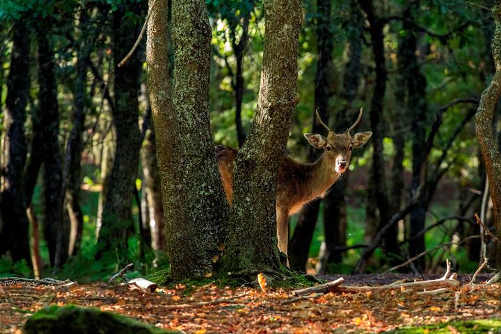 Concurso fotográfico perpetua beleza do Parque Biológico da Serra das Meadas