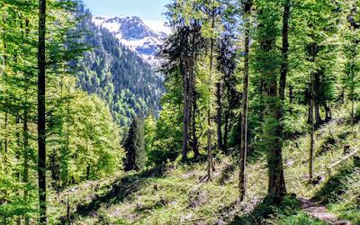 Abstieg von der Schwarzenberghütte ins Ostrachtal Hindelang Allgäu