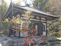長谷寺のマンサク