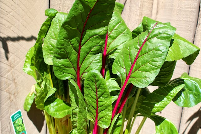 Rainbow Swiss Chard from my garden.