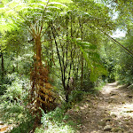 The rocky trail beside the upper Lane Cove River (394526)