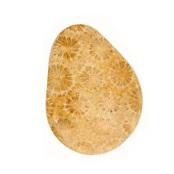 Fossil Coral Triangular Cabochon