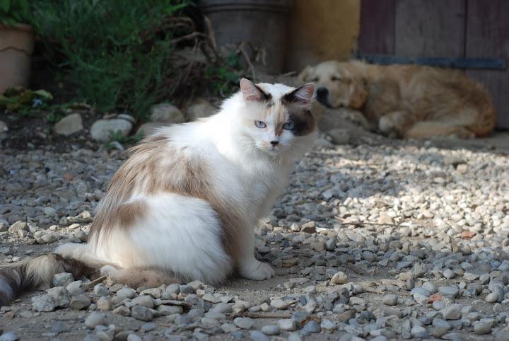 Perdu mon chat sur Tullins DSC_4479