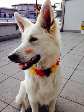 blogger-image-788907509 %Hundeblog