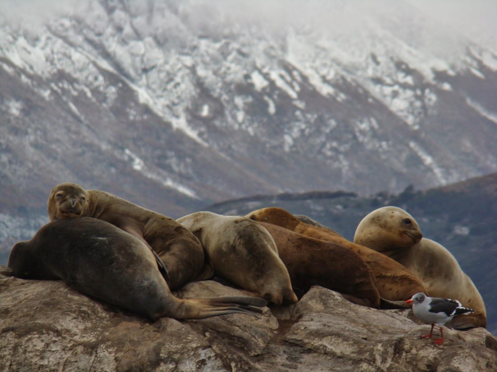 Canal de Beagle, Ushuaia, Argentina, Elisa N, Blog de Viajes, Lifestyle, Travel, Lobos marinos