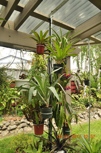 hanger save space bromeliad orchid foliage flower plant