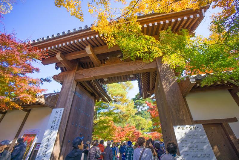 京都 永観堂 紅葉 写真1