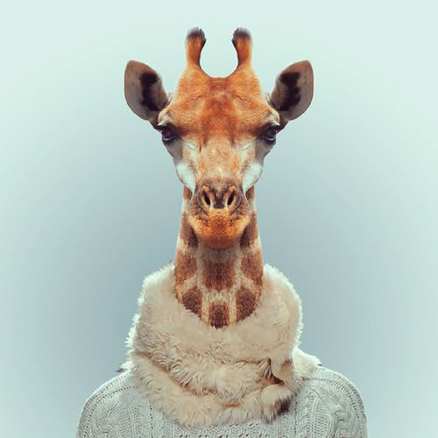 *Zoo Portraits動物時尚秀:正經八百時裝篇! 5