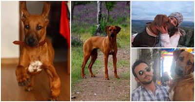 Simba, a história do cão que foi abatido a tiro por um vizinho