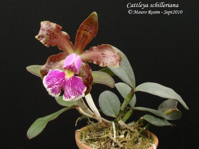 Растения из Тюмени. Краткий обзор - Страница 2 16092