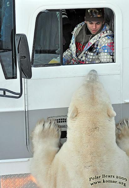 Urso pardo vs Urso polar - Página 2 DSC_0595-churchill-polar-rover