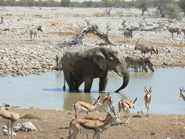 أفضل ما في أفريقيا  Best of Africa Namibia_180807113914