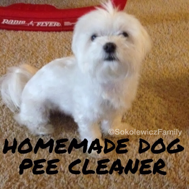 My Dog Peed On My Rug: Sokolewicz Family: Carpet Cleaner