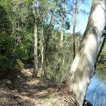 Walking beside Piles Creek (374056)