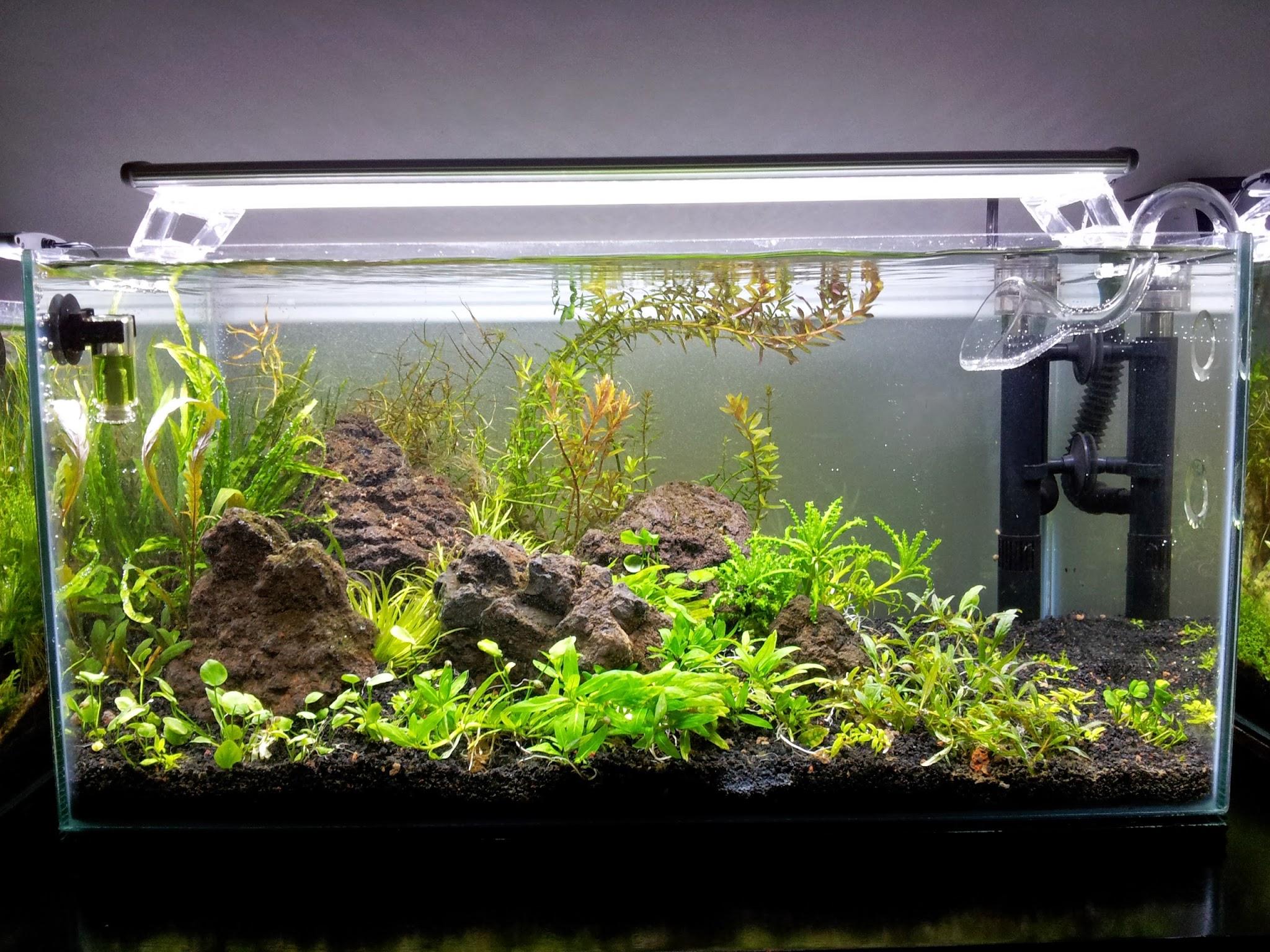Nuevo montaje acuario batuke - Montaje de acuarios ...