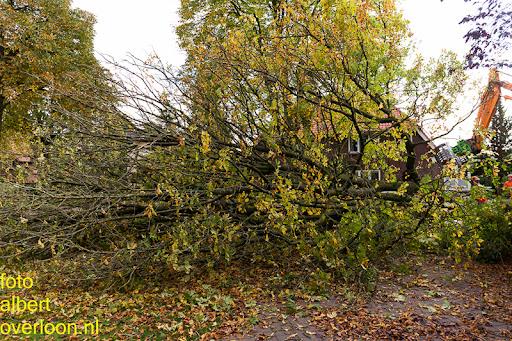 Bomen gekapt Museumlaan in overloon 20-10-2014 (29).jpg