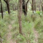 Open woodlands on Stockyard Spur Trk (34226)