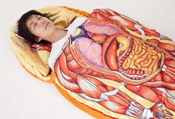 Anatomía divertida