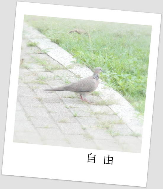 陰天@一個小小的公園 (圖片5枚)