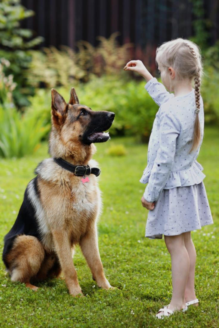 Toddler girl training the dog #germanshepherd in 2020 | German ...