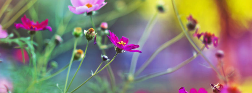 Amazing flowers facebook cover